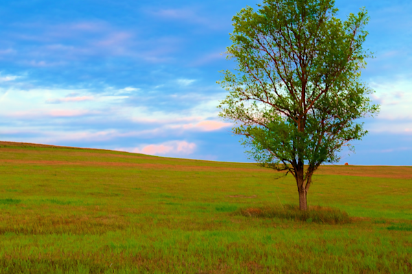 Tree On The Prairie Photography Art | Silver Spirit Photography