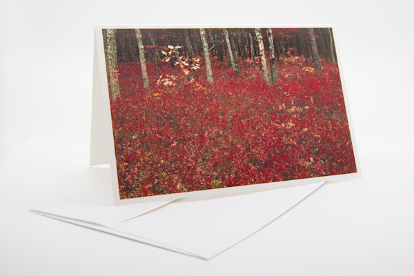 Inkberry Autumn   Note Card | Robert Vielee Photography