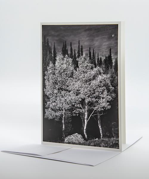 Three Aspens, Moonrise   Note Card | Robert Vielee Photography