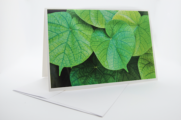 Leaves Of  The Sea Grape   Note Card | Robert Vielee Photography