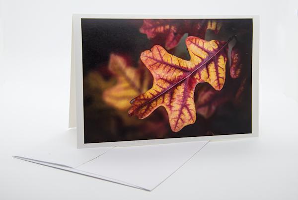 Post Oak Leaf, Autumn   Note Card | Robert Vielee Photography