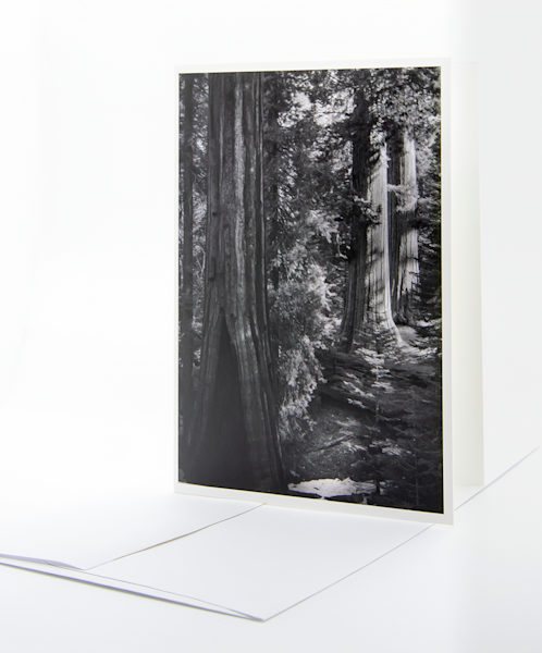 Redwood Grove, Footpath   Note Card | Robert Vielee Photography
