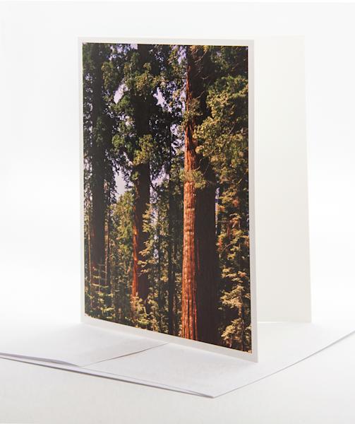 Giant Seguoia Grove   Note Card | Robert Vielee Photography