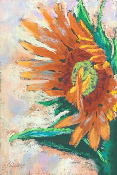 Bashful Sunflower   Mary A. Planding