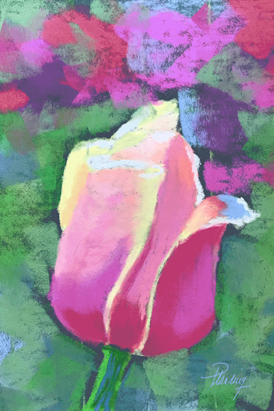 Lorraine's Tulip   Mary Planding