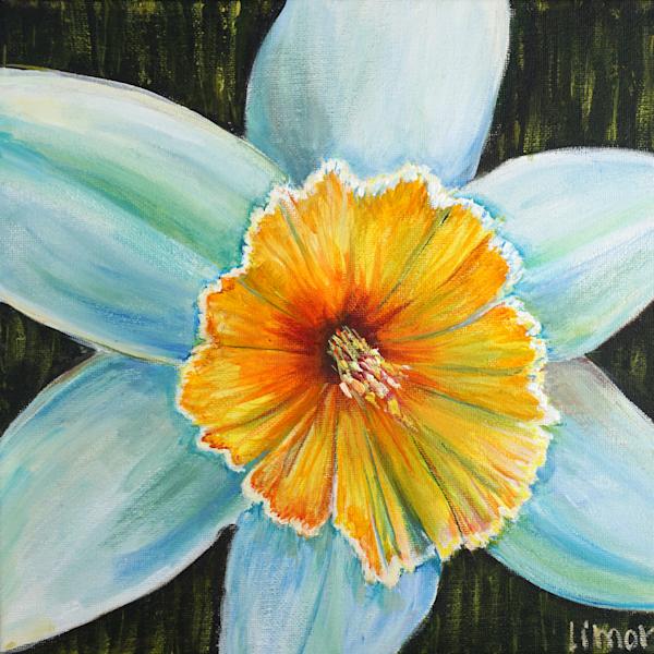 Daffodil Print Art   Limor Dekel Fine Art