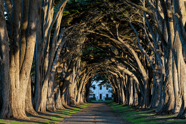 Print Art Point Reyes California The Cypress Tree Tunnel
