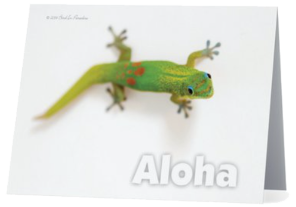 Green Gecko Notecard | Bird In Paradise