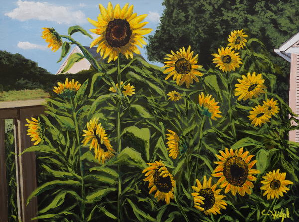 Sunflowers In Garden Print