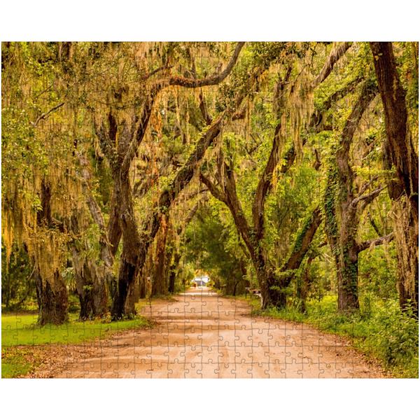 Oaks Puzzle | Willard R Smith Photography