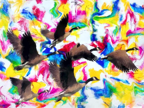 Geese Flying Over Key West Art | Windhorse
