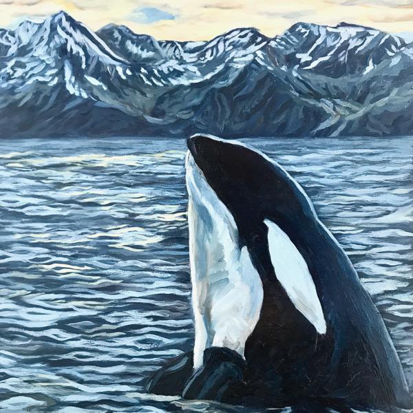 Orca Whale Alaska Ocean Mountain Art Print by Amanda Faith