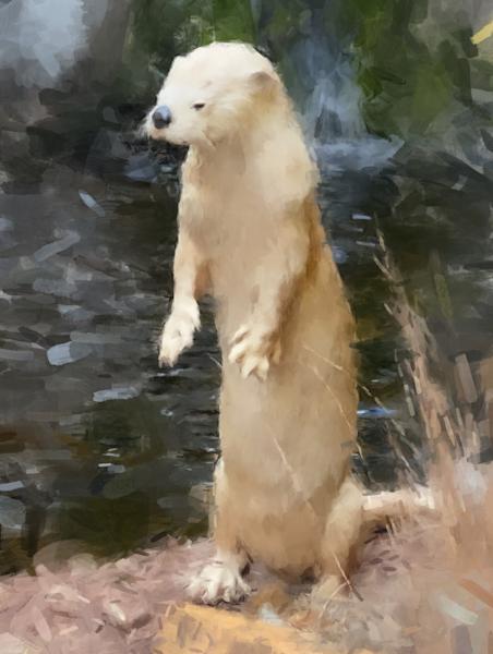 Otter Art | Windhorse
