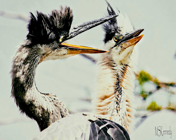 Blue Heron Sqauble Art   Cutlass Bay Productions, LLC