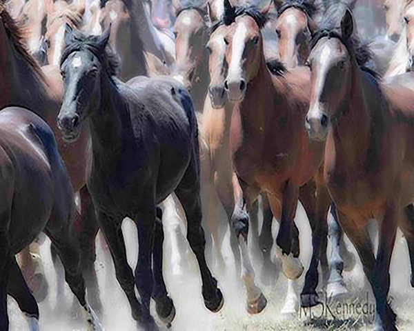 Wild Mustangs Art | Cutlass Bay Productions, LLC