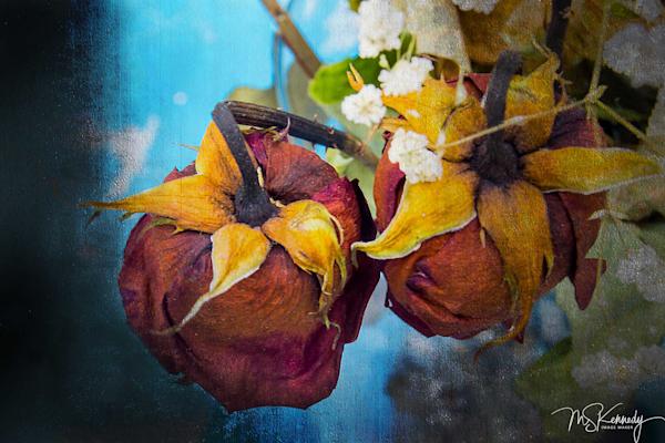 Faded Roses Art | Cutlass Bay Productions, LLC