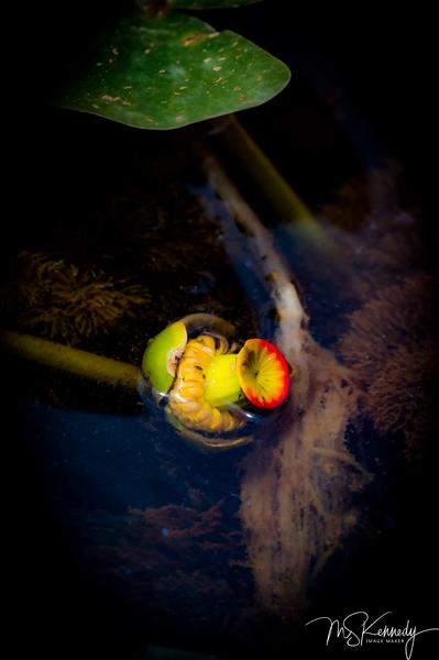 Beauty In The Swamp Art | Cutlass Bay Productions, LLC