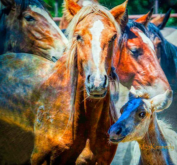 High Strung Mustangs Art | Cutlass Bay Productions, LLC