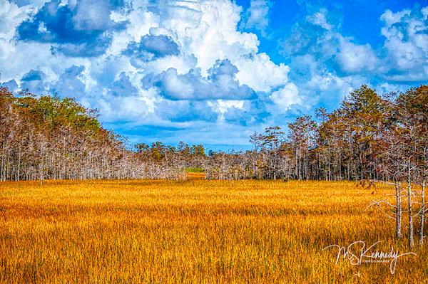 Grassy Waters Landscape Art   Cutlass Bay Productions, LLC