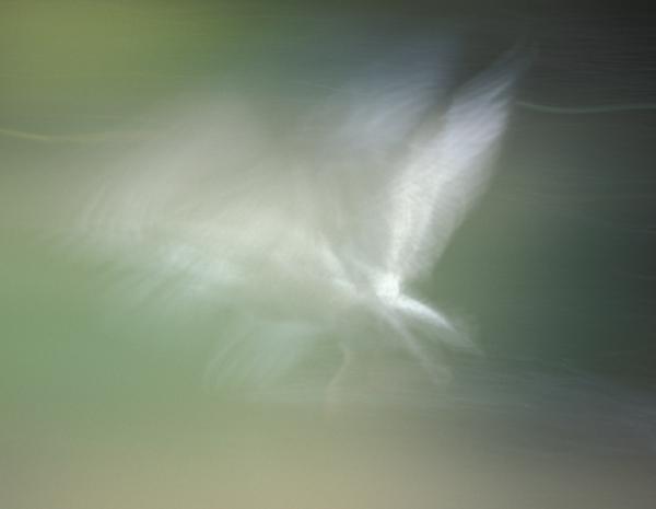 seagul flight blur dark green background
