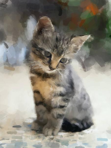 Kitten Watching Art   Windhorse