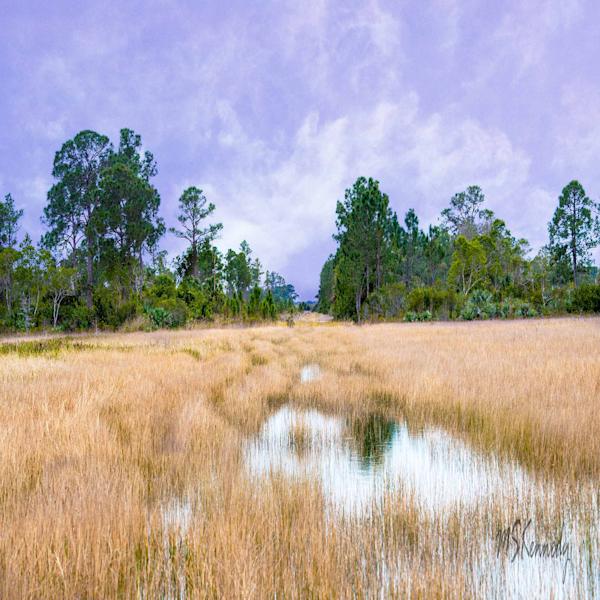 River Of Grass Art | Cutlass Bay Productions, LLC