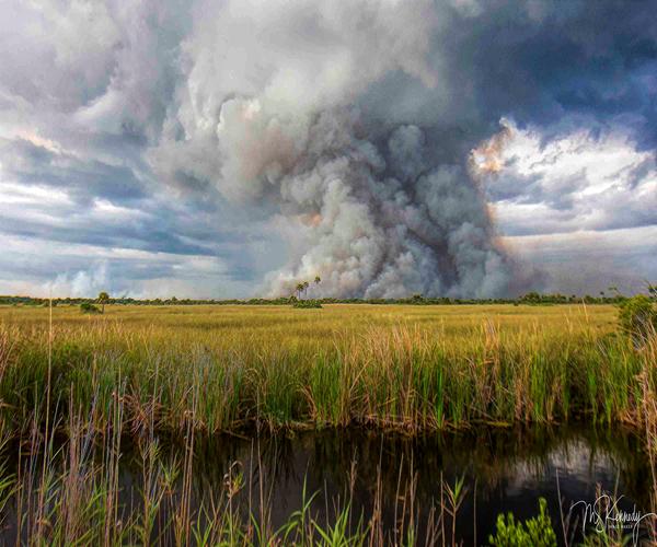Distant Everglades Fire Art | Cutlass Bay Productions, LLC