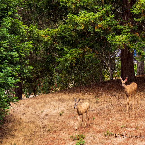 Two Deer Art | Cutlass Bay Productions, LLC