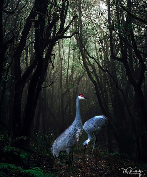 Some Enchanted Forest Art   Cutlass Bay Productions, LLC