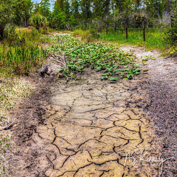 Dry Season In The Everglades Art   Cutlass Bay Productions, LLC