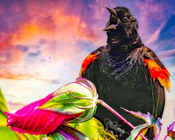 Red Winged Black Bird Art | Cutlass Bay Productions, LLC