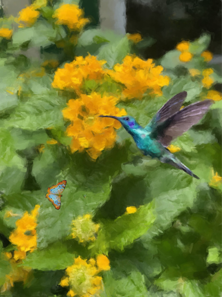 Hummingbird And Butterfly Art   Windhorse