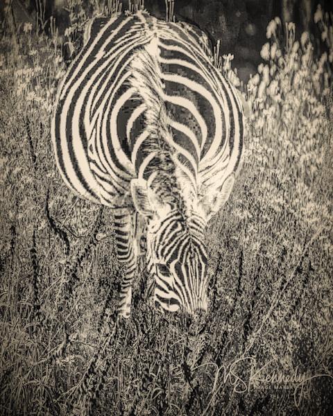 Feeding Zebra Art | Cutlass Bay Productions, LLC