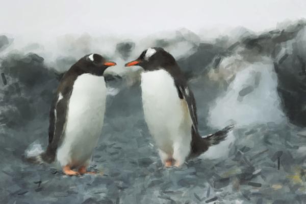 Gentoo Penguins Art   Windhorse
