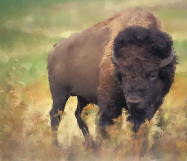 Bison   Gna Art | Windhorse