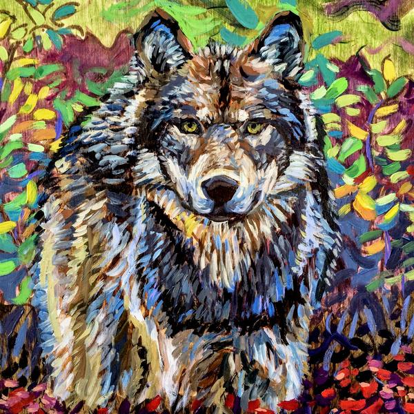 Alaska Gray Wolf in Tundra Art Print by Amanda Faith Thompson