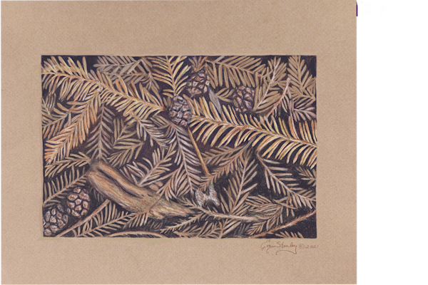 """Walking Among Giants"" Art   Drawn To Nature"