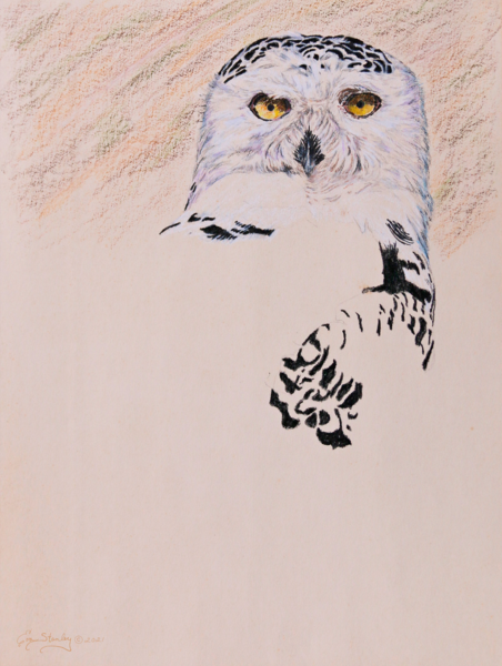 Png  Lg  Snowy Owl W Sig Mg 9450 2 Art   Drawn To Nature