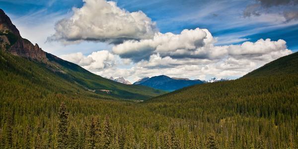 Morning Clouds, Banff  Photography Art | Alina Marin-Bliach Photography/alinabstudios LLC