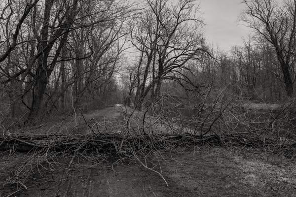 Beyond The Obstacle Photography Art   Alina Marin-Bliach Photography/alinabstudios LLC
