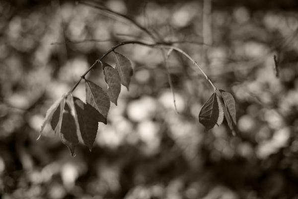 Hanging On Photography Art | Alina Marin-Bliach Photography/alinabstudios LLC