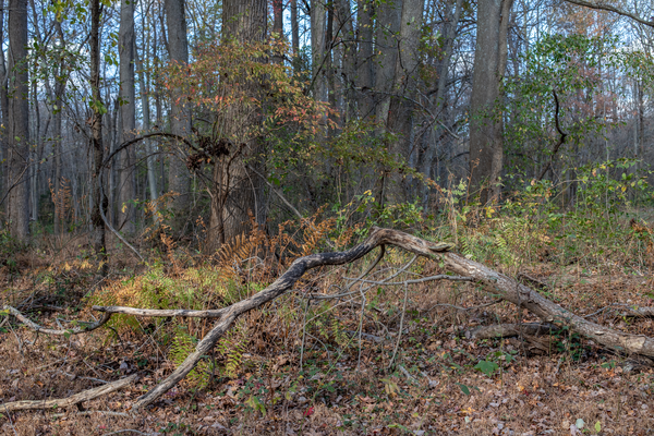 Branches And Ferns Photography Art | Alina Marin-Bliach Photography/alinabstudios LLC