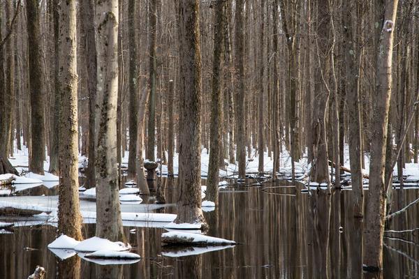 Wintering Trees Photography Art | Alina Marin-Bliach Photography/alinabstudios LLC