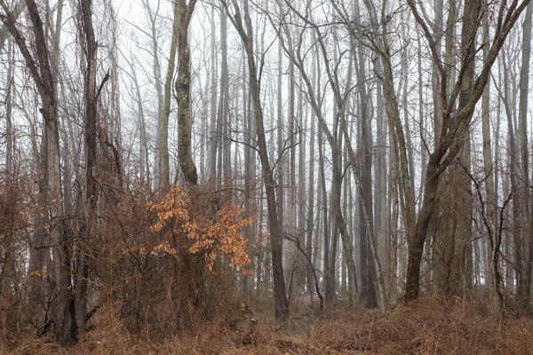 A Long Winter's Rest Photography Art | Alina Marin-Bliach Photography/alinabstudios LLC
