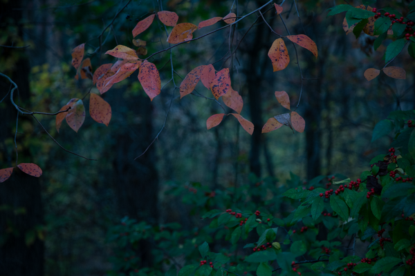 Enchanted Forest Photography Art | Alina Marin-Bliach Photography/alinabstudios LLC
