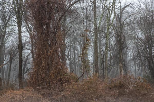 Winter Slumber Photography Art | Alina Marin-Bliach Photography/alinabstudios LLC