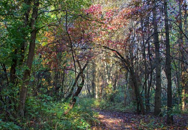 Secret Garden Photography Art | Alina Marin-Bliach Photography/alinabstudios LLC