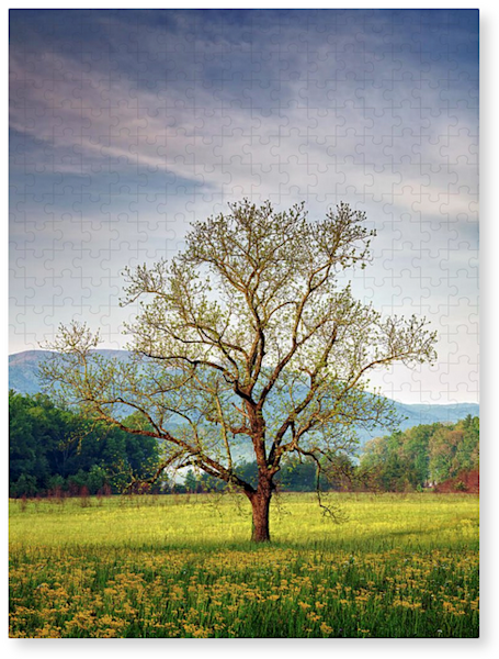 Spring Glow in Cades Cove Jigsaw Puzzle | Shop Photography by Rick Berk