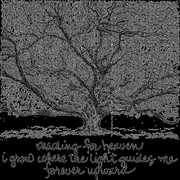 Audubon Park Oak Art | bharris Art, LLC