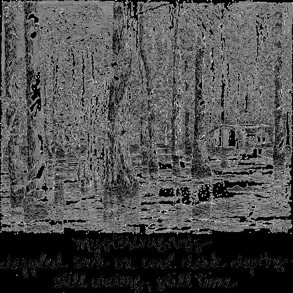 swamps   haiku merch